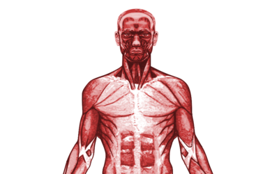 New Specification GCSE PE Muscular System – Powerpoint – Worksheet – Resources