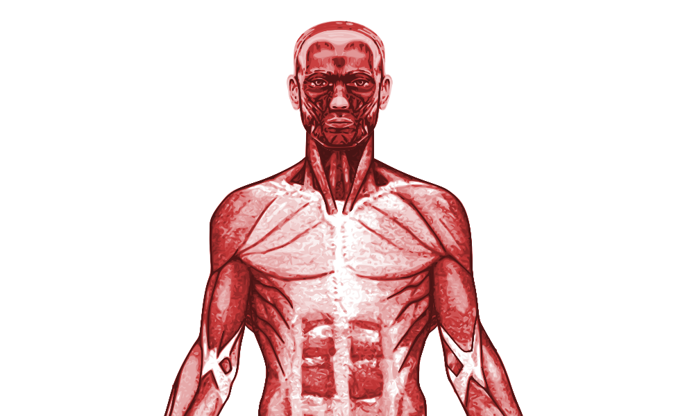 New Specification GCSE PE Muscular System - Powerpoint - Worksheet ...